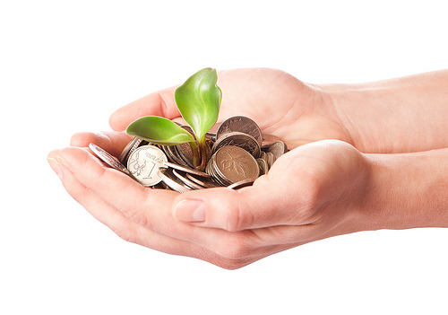 money sprouting plant